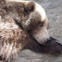 The zoo no longer has any black bears, but the brown bears and polar bears are always fun to watch. Even when they're just resting.