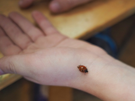 N loves ladybugs, and all other kinds of beetles. He's also our one child who's not squeamish about holding bugs. Its not uncommon for him to come running inside with something he's caught before dashing back off to look for another one.