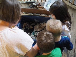 They're feeding a tub full of worms and isopods, and they're fascinated.