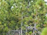 Comanche Peak Wilderness 1.6