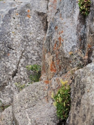 Comanche Peak Wilderness 1.14