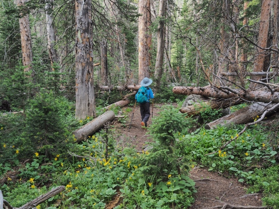 Comanche Peak Wilderness 2.7