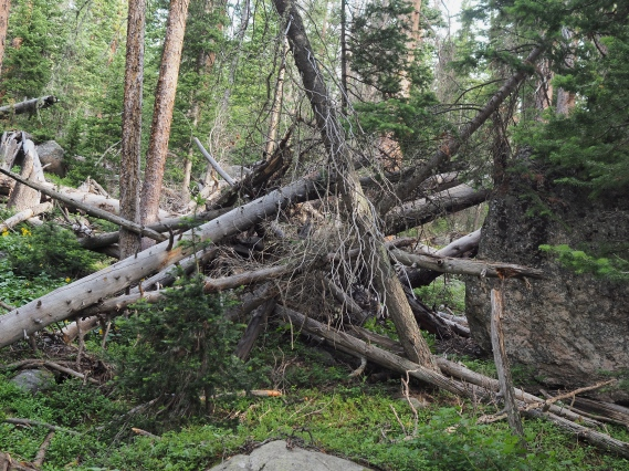 Comanche Peak Wilderness 2.8