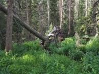 Comanche Peak Wilderness 2.13