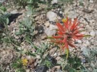 Comanche Peak Wilderness 2.24