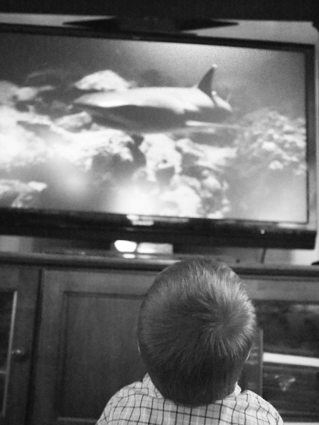M is absolutely shark-crazed right now. He plays with shark figures and stuffed animals, reads shark books, talks about sharks constantly, and especially enjoys watching documentaries about sharks!