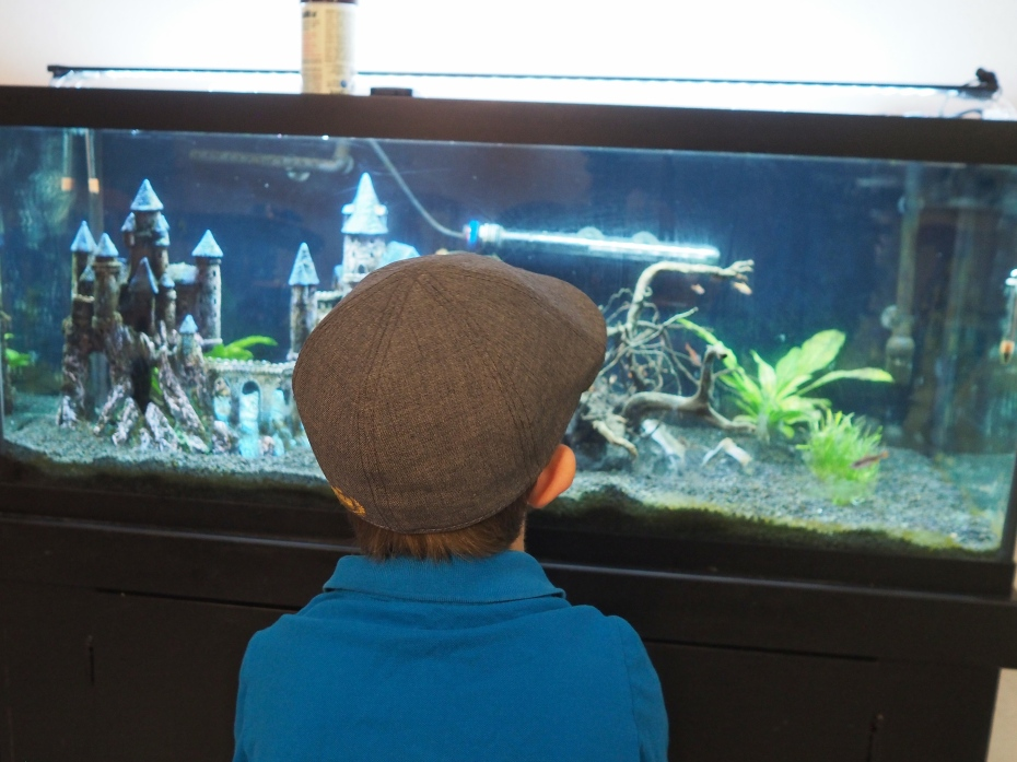 An aquarium is an endless source of interest. He often spends time sitting amd watching them swim.