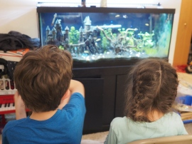 Day 331 - Watching Fish